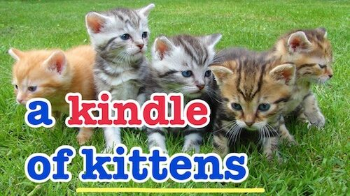 子猫の集団